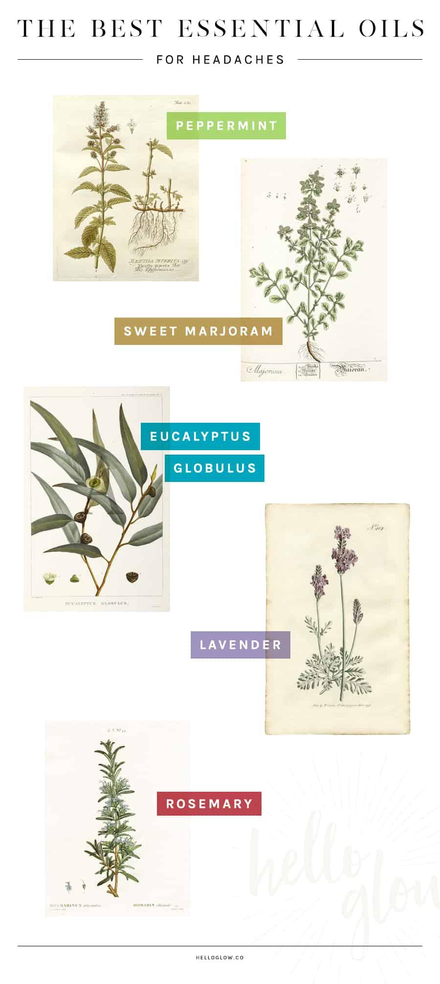 The best essential oils graphic design